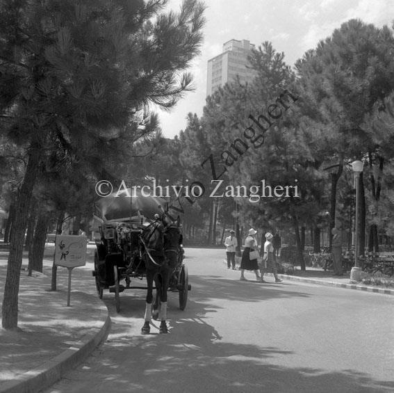 Carrozze dei cavalli