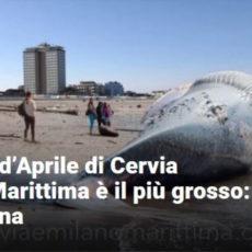 Balena d'Aprile